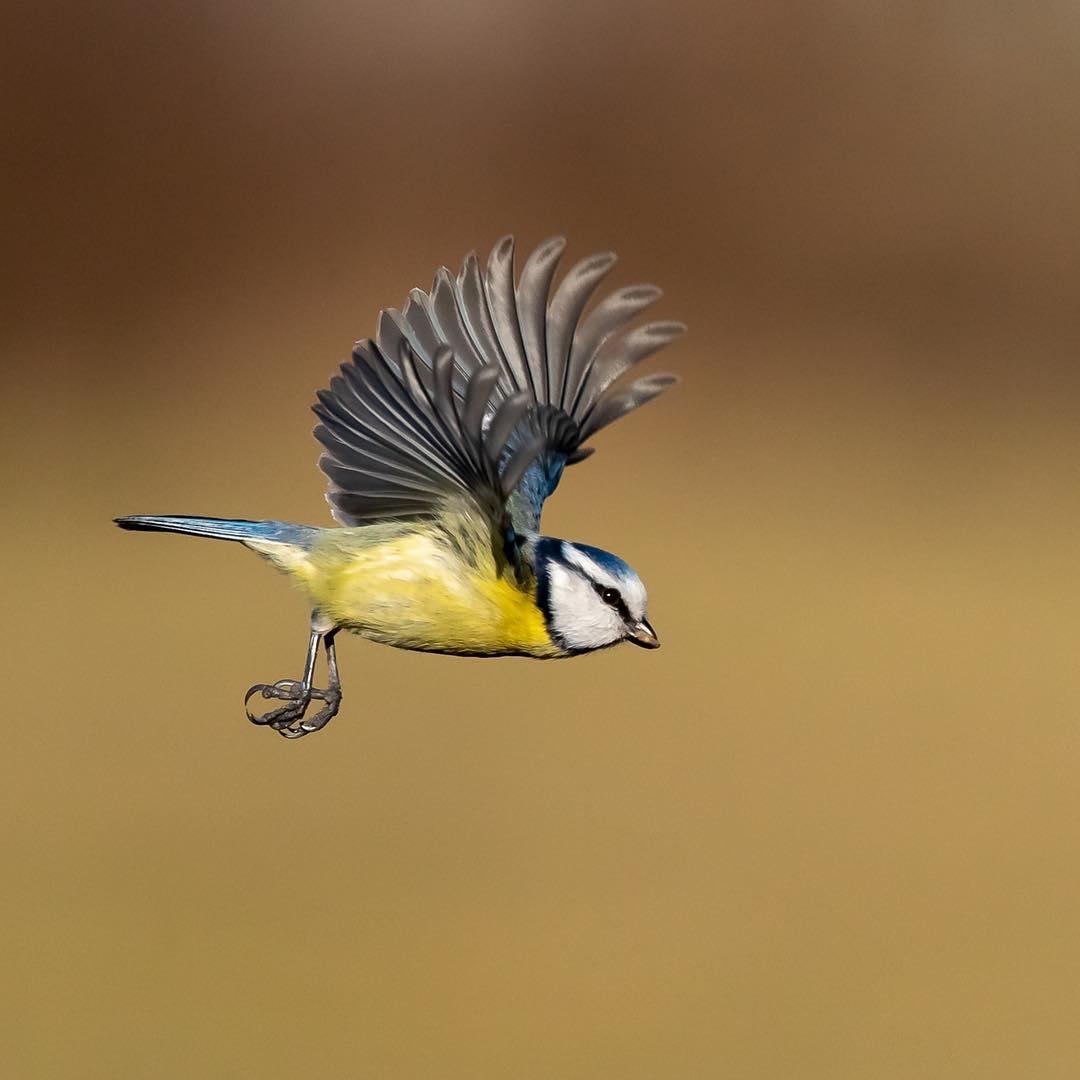 Фотографии птиц от Бенджамина Венде