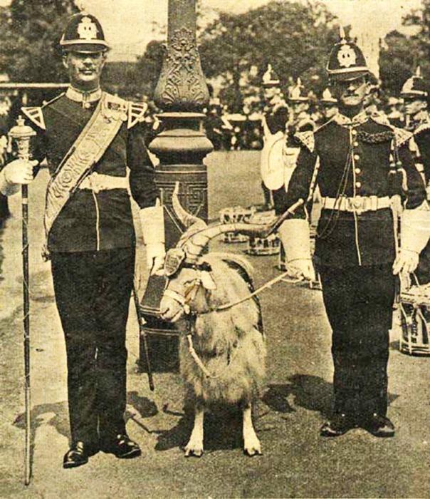 Как козлы попали на службу в Британской армии