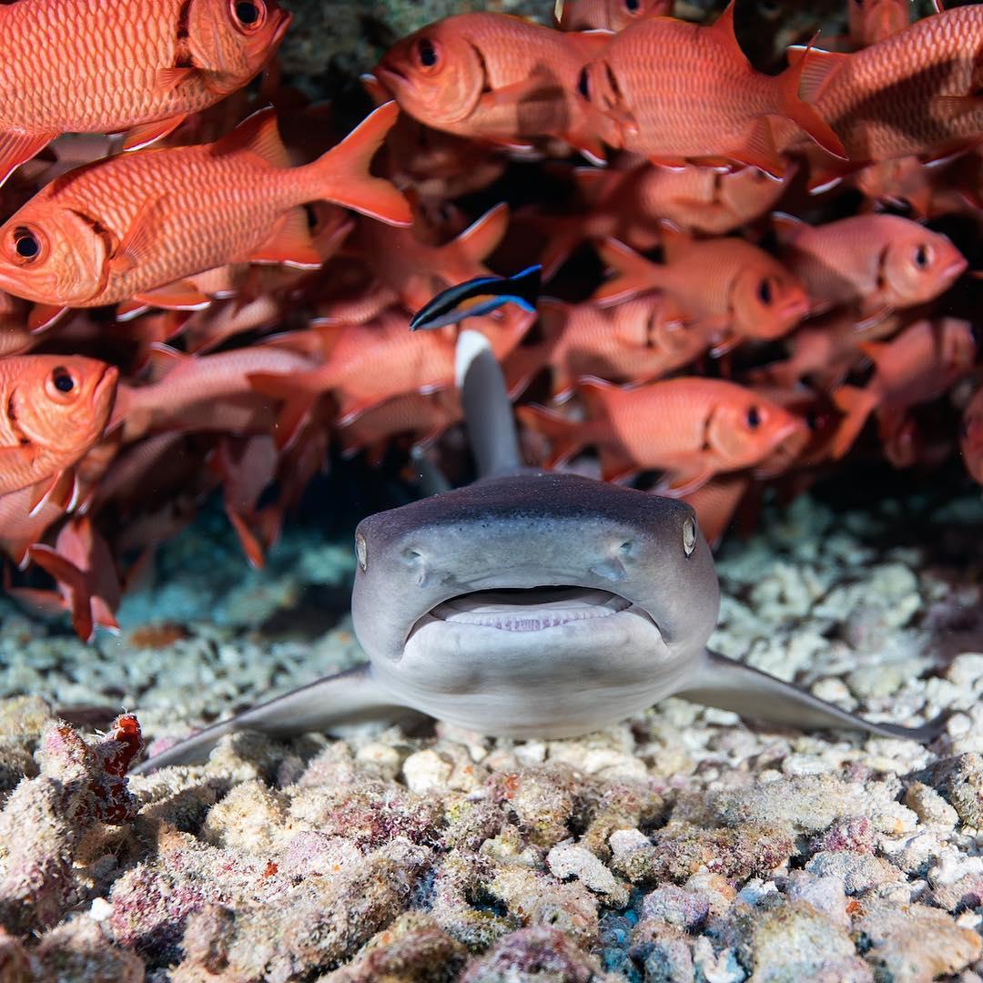 Захватывающие подводные фотографии от Хуана Олифанта