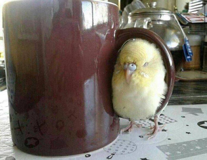 Милые птицы иногда смешнее и харизматичнее других существ