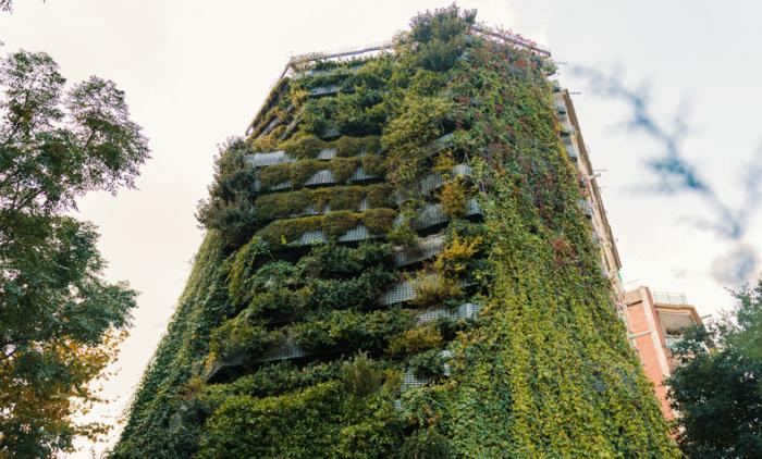 Польза вертикальных садов на фасадах домов