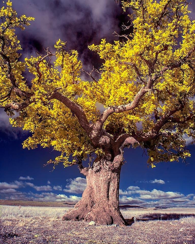 Удивительные инфракрасные пейзажи от Марты Боррегуеро