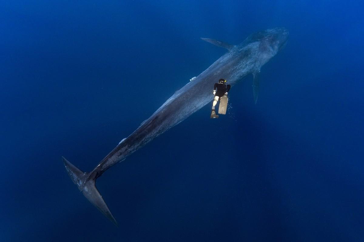 Потрясающие снимки встречи дайвера с 30-метровым синим китом
