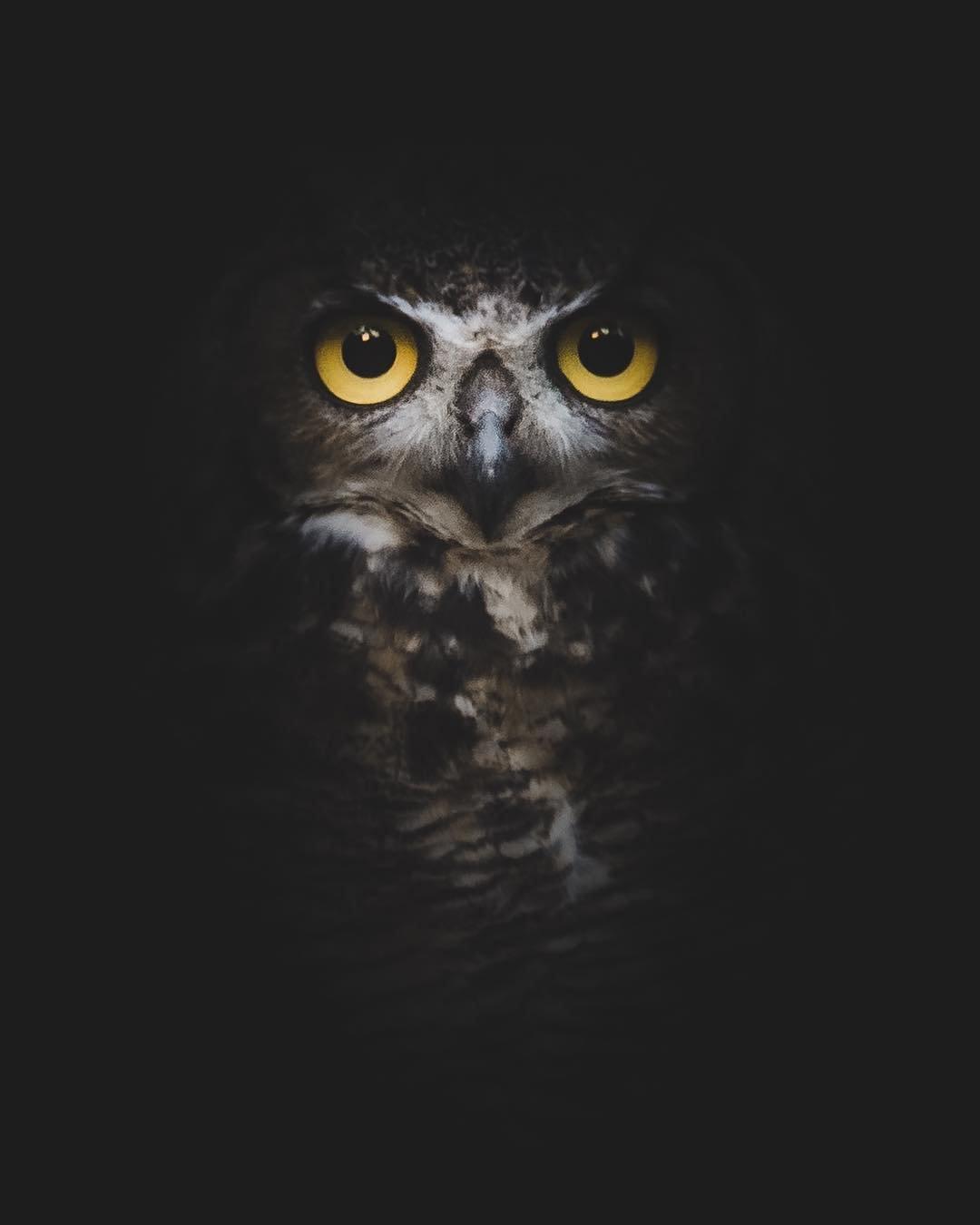 Потрясающие совы на снимках Даниэля Невареса
