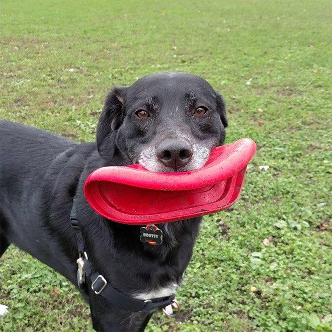 Собаки с летающими дисками в зубах
