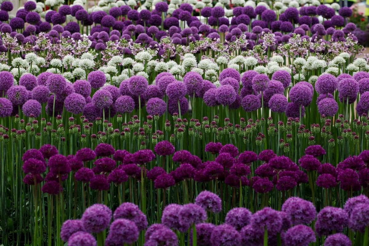 Ежегодная выставка цветов в Лондоне