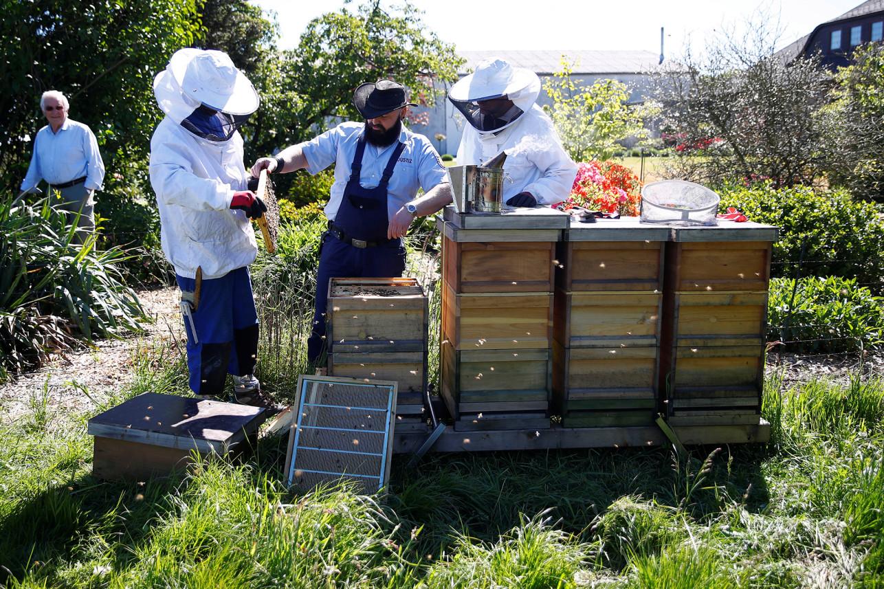 Заключенные помогают спасать пчел в Германии
