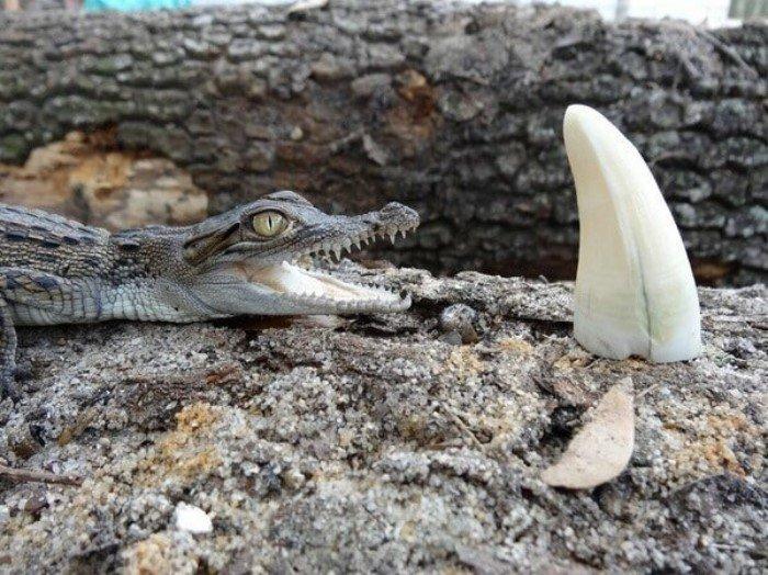 Животные на своём примере показывают, что размеры познаются в сравнении