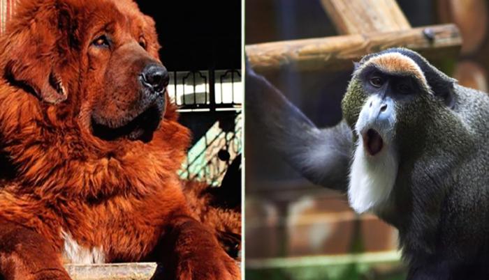 Породы животных, которые стоят баснословных денег