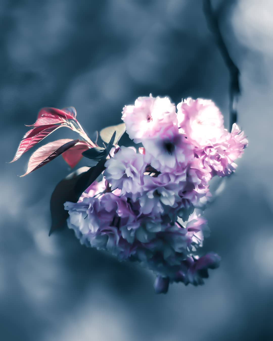 Красота цветов на снимках Питера Висса