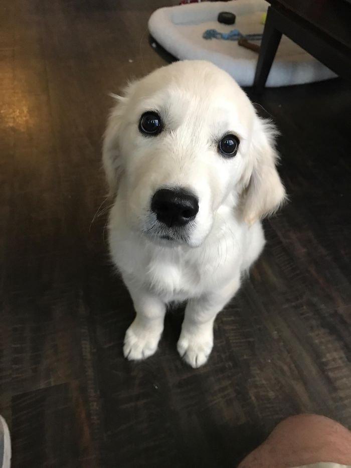 Очаровательные и милые щенки заряжают позитивом