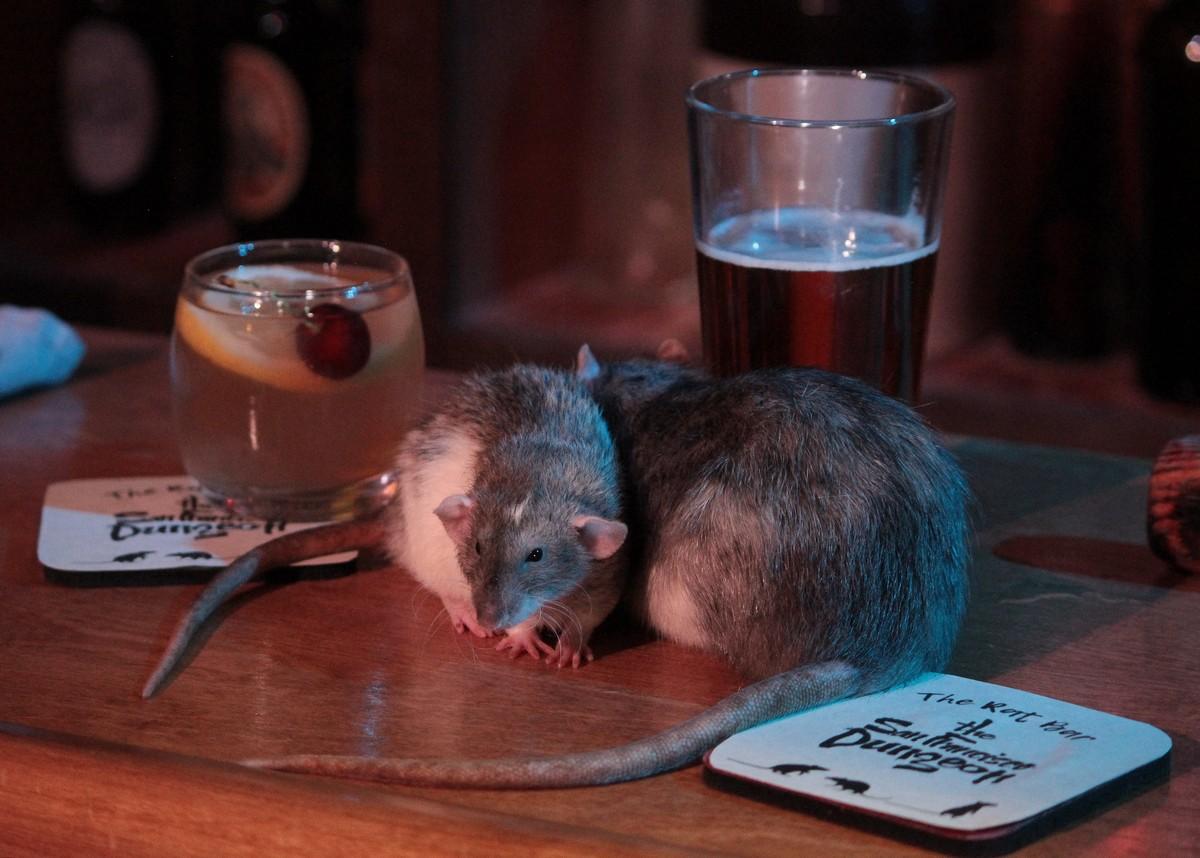 Бар с крысами в Сан-Франциско