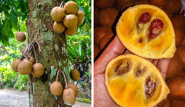 Экзотические фрукты, которых вы ещё не видели