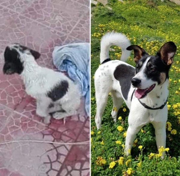 Милые животные до и после того, как обрели новый дом