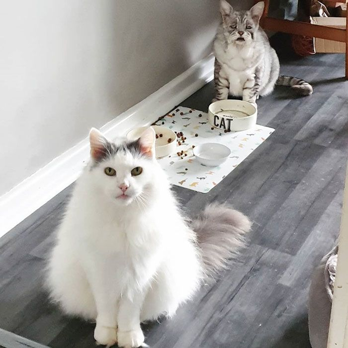 Кот-шарпей с редким заболеванием обзавелся хозяевами