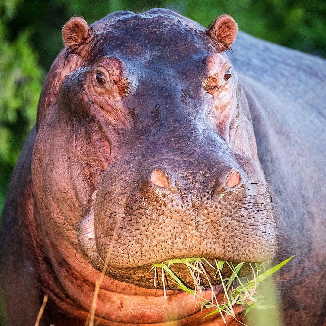 картинки африканские животные фото