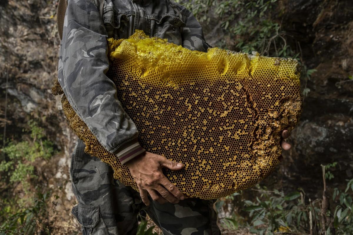 Охотники за диким мёдом в Китае
