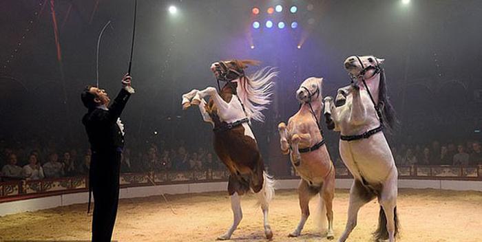 Цирк в Германии использует голограммы вместо животных