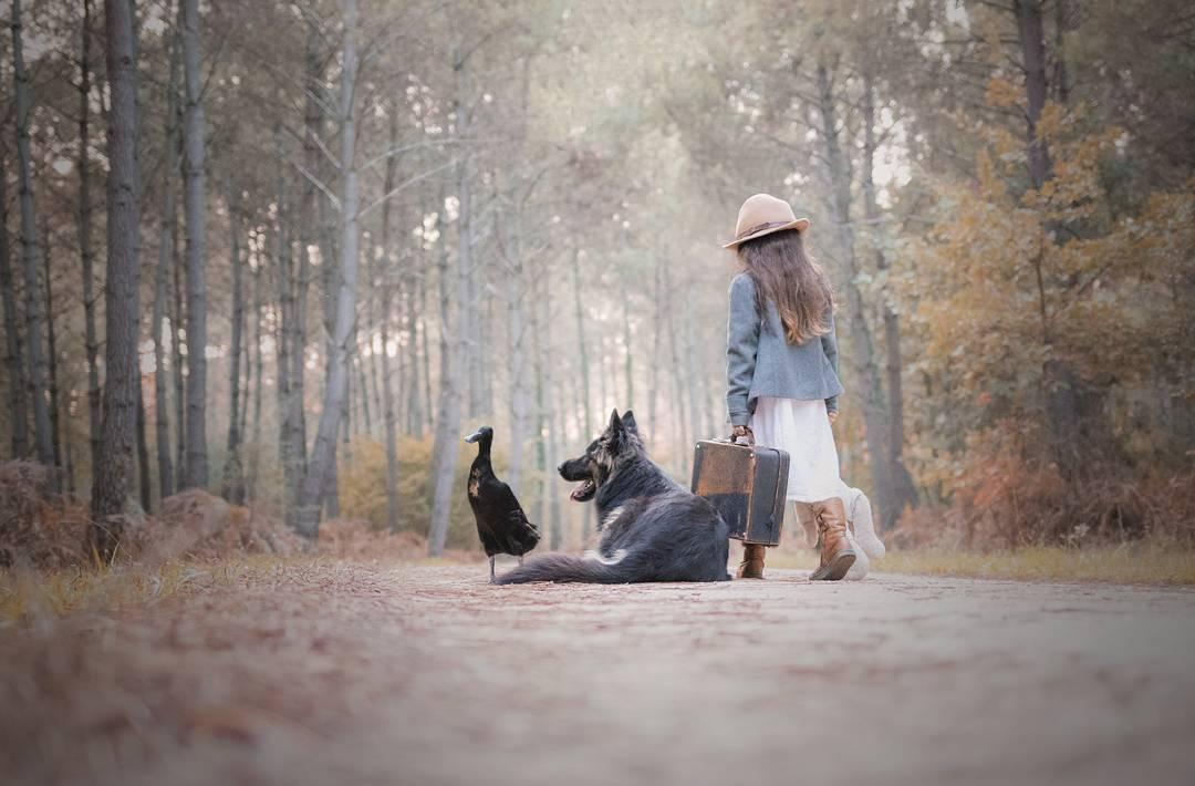 Трогательная дружба немецкой овчарки и утки