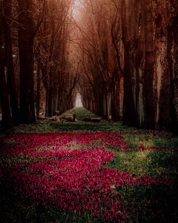Величественные цветы на снимках Таши Тайдель