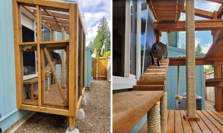 Владельцы кошек строят для них крутые уличные площадки