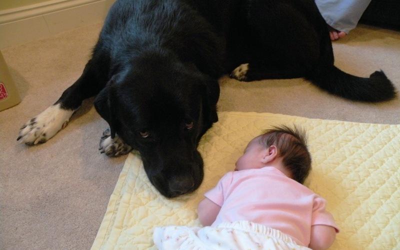 Популярные мифы о больших собаках