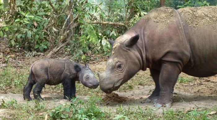10 исчезающих животных нашей планеты