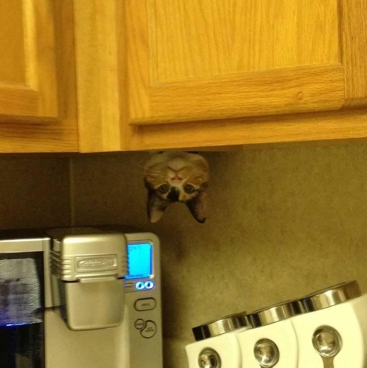 Домашние животные, которые умеют спрятаться от своих хозяев