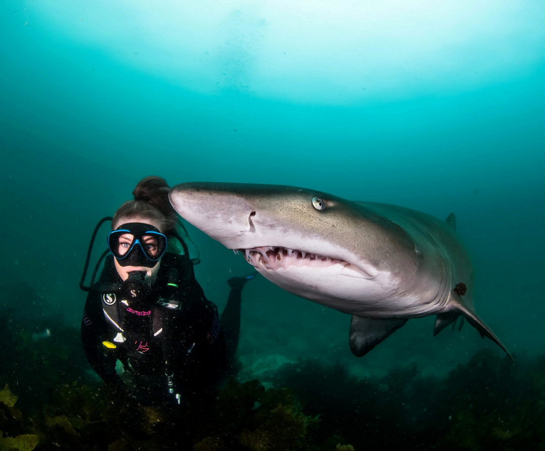 Потрясающие подводные снимки с морскими обитателями от Шеннон Лии Майерс
