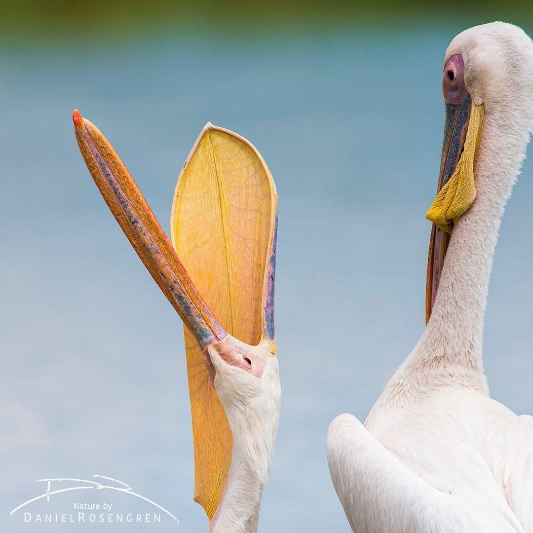 Дикие животные и птицы на снимках Даниэля Розенгрена