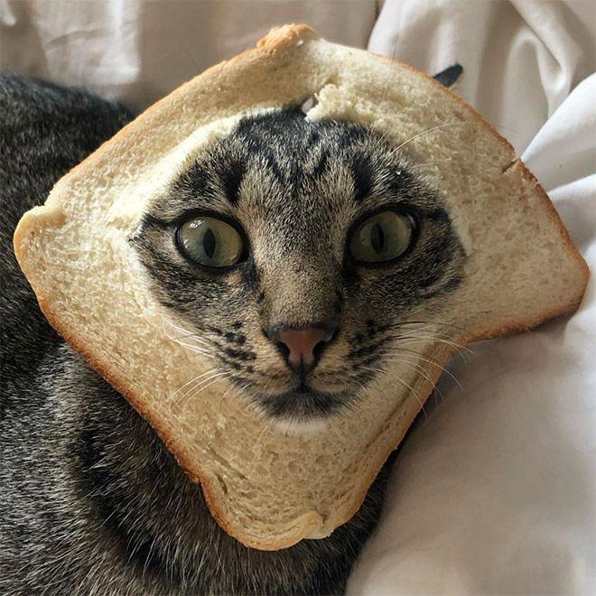 Зачем люди делают бутерброд с котом