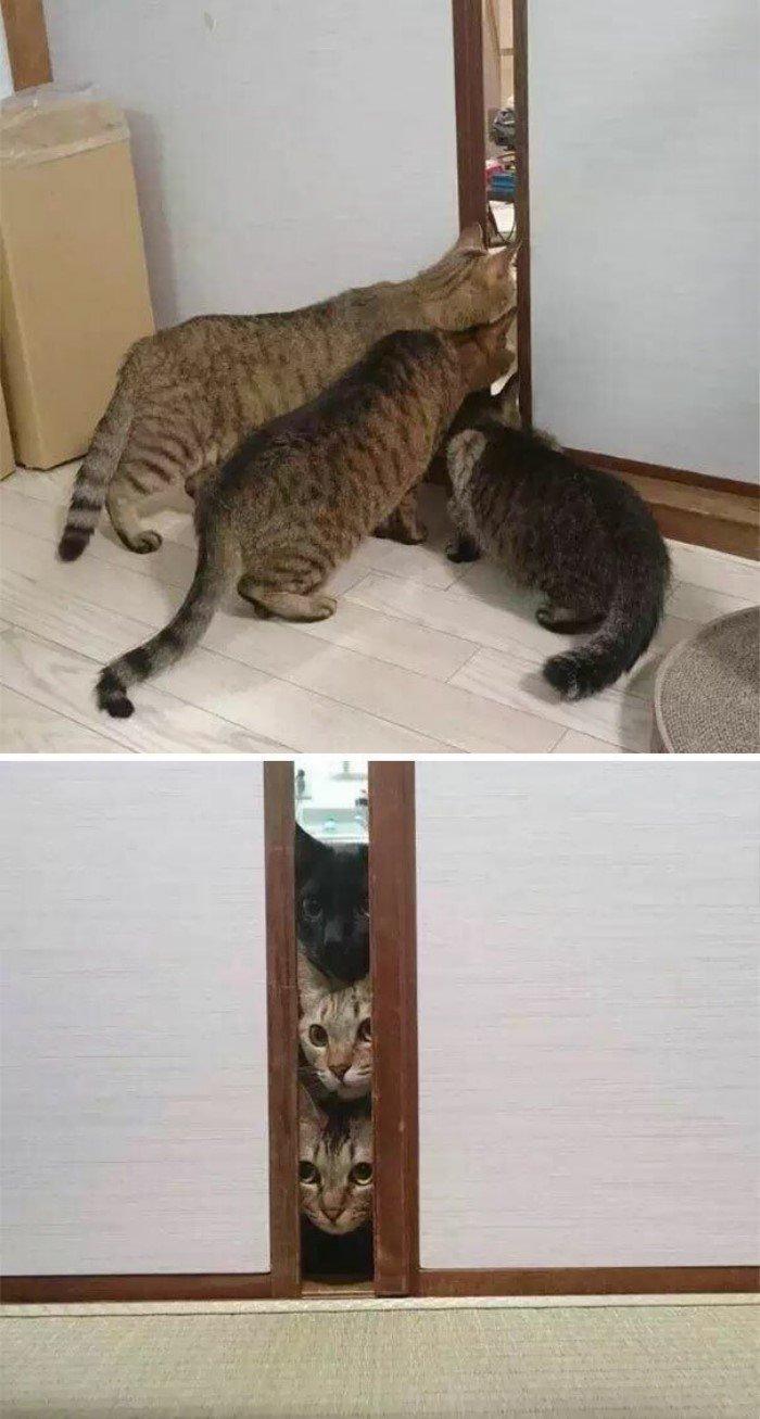 Выражение морд кошек и собак в моменты потрясений