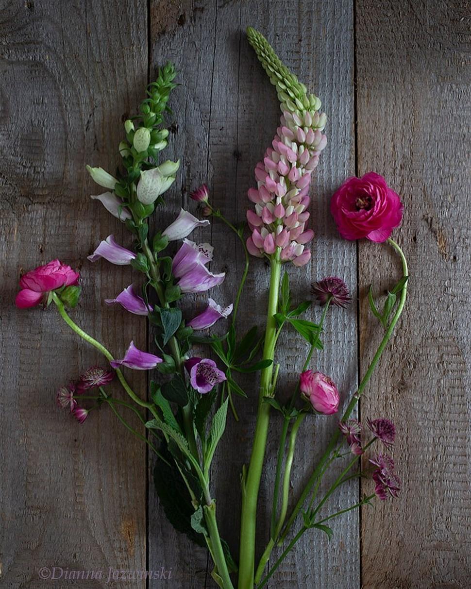 Красивые цветы на снимках от Дианны Язвински