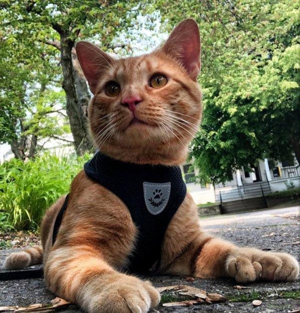 Очаровательный котик, у которого необычное строение передних лапок