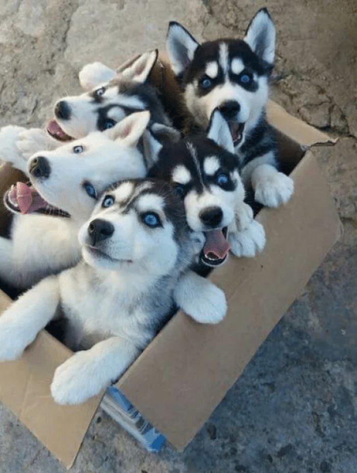 Фотографии прелестных щенят вызовут улыбку и подарят позитив