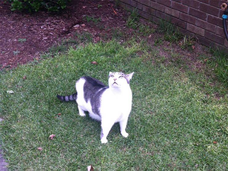 Коты и пугающие прогулки на улицу