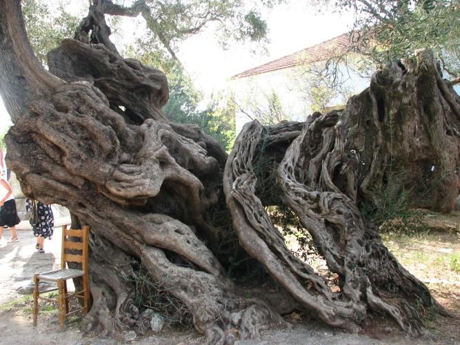 Необычные и прекрасные деревья, которые создала природа