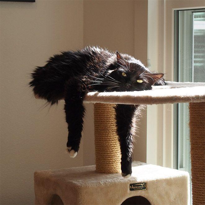 Тающие коты: глобальное потепление - не шуточки