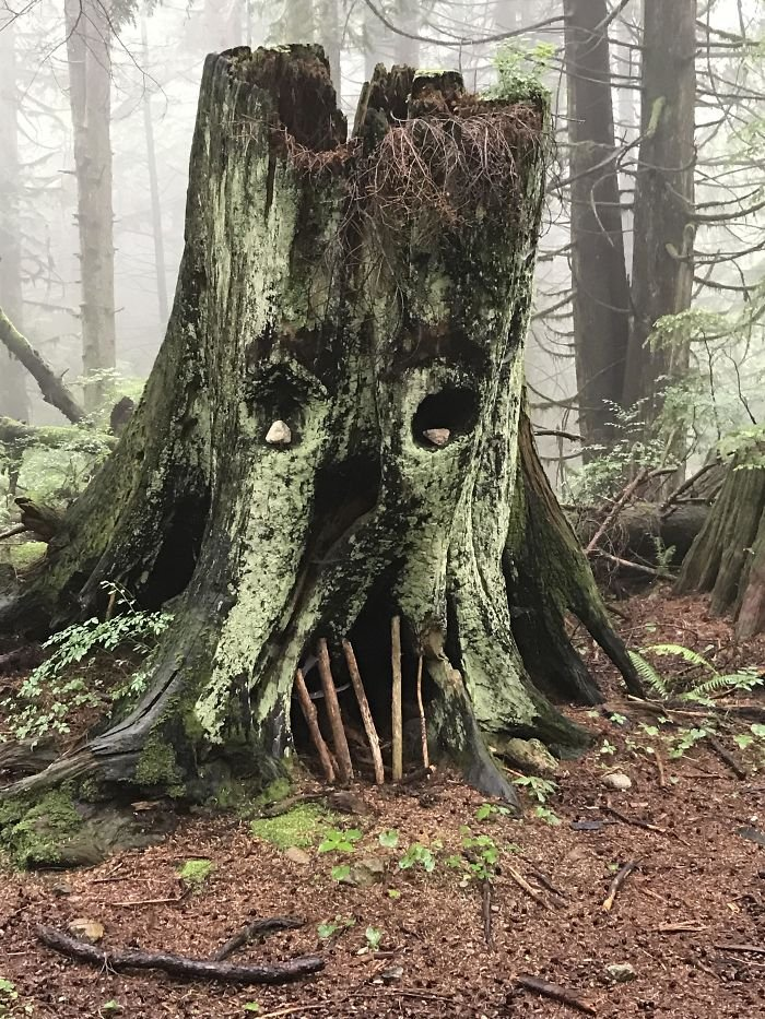 Странные и забавные находки людей во время прогулок по лесу