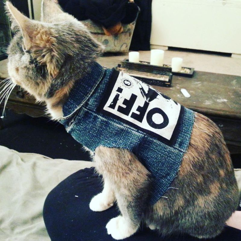 Крутые коты-рокеры на снимках
