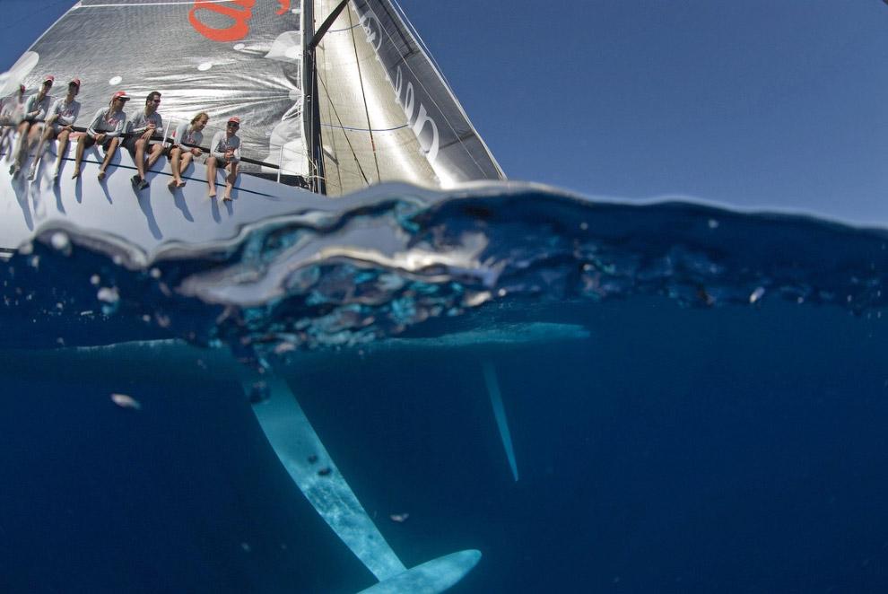 Парусники в объективе морского фотографа Курта Арриго