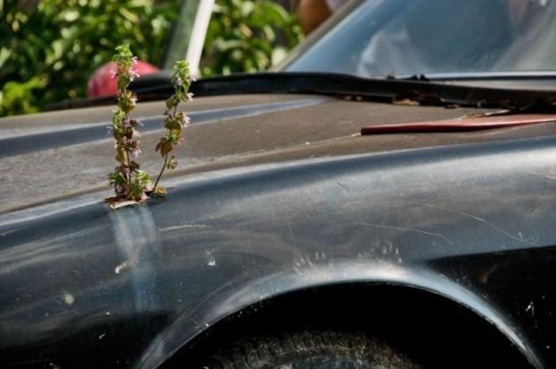 Перевоплощение ржавого Datsun S30