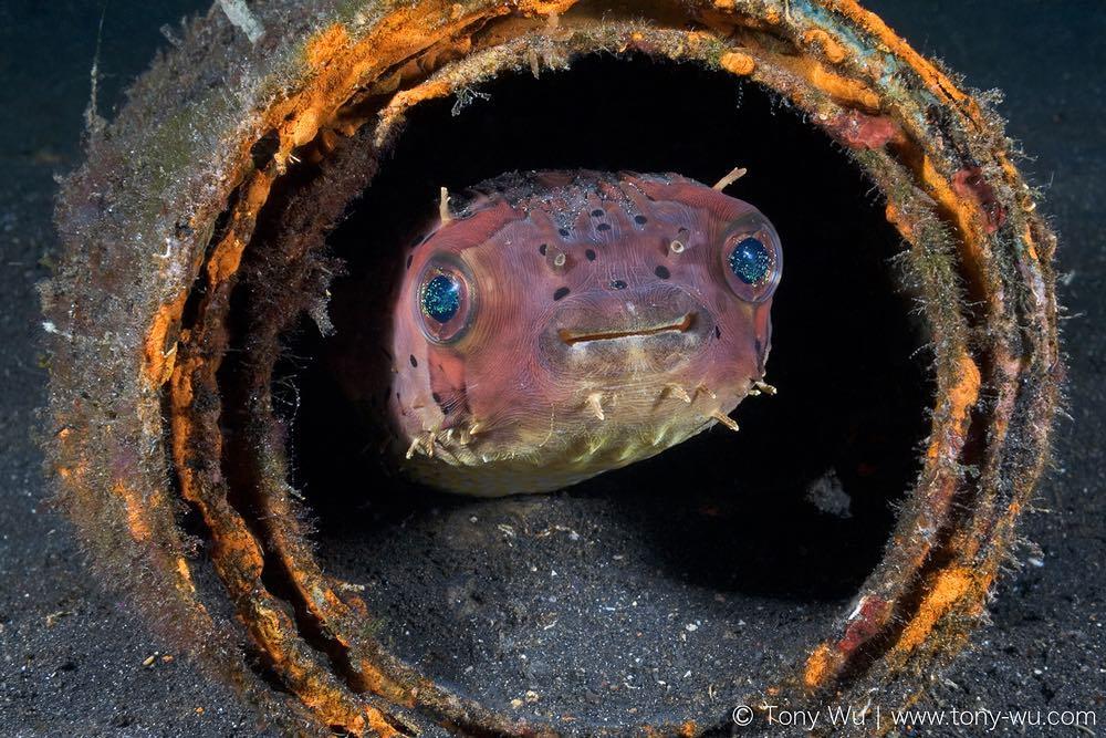 Удивительные подводные существа на снимках Тони Ву