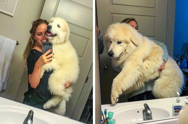 20 очень больших собак, которые любят обнимашки и уют