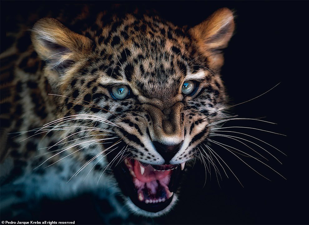 Портреты животных от перуанского фотографа Педро Харке