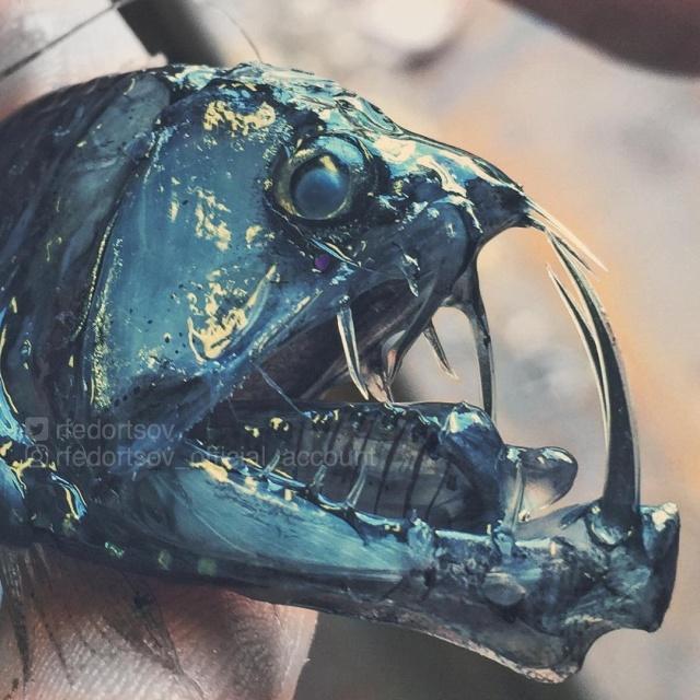 Чудища морских глубин на снимках Романа Федорцова