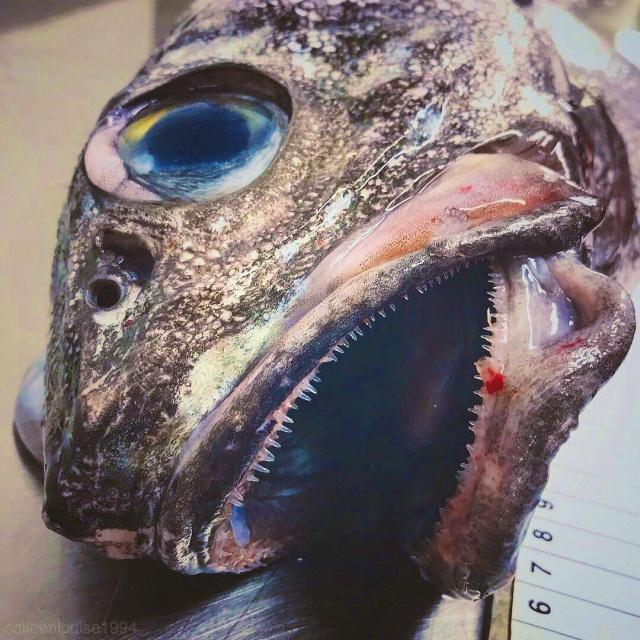 A mélytengeri szörnyek a római Fedortsov képei
