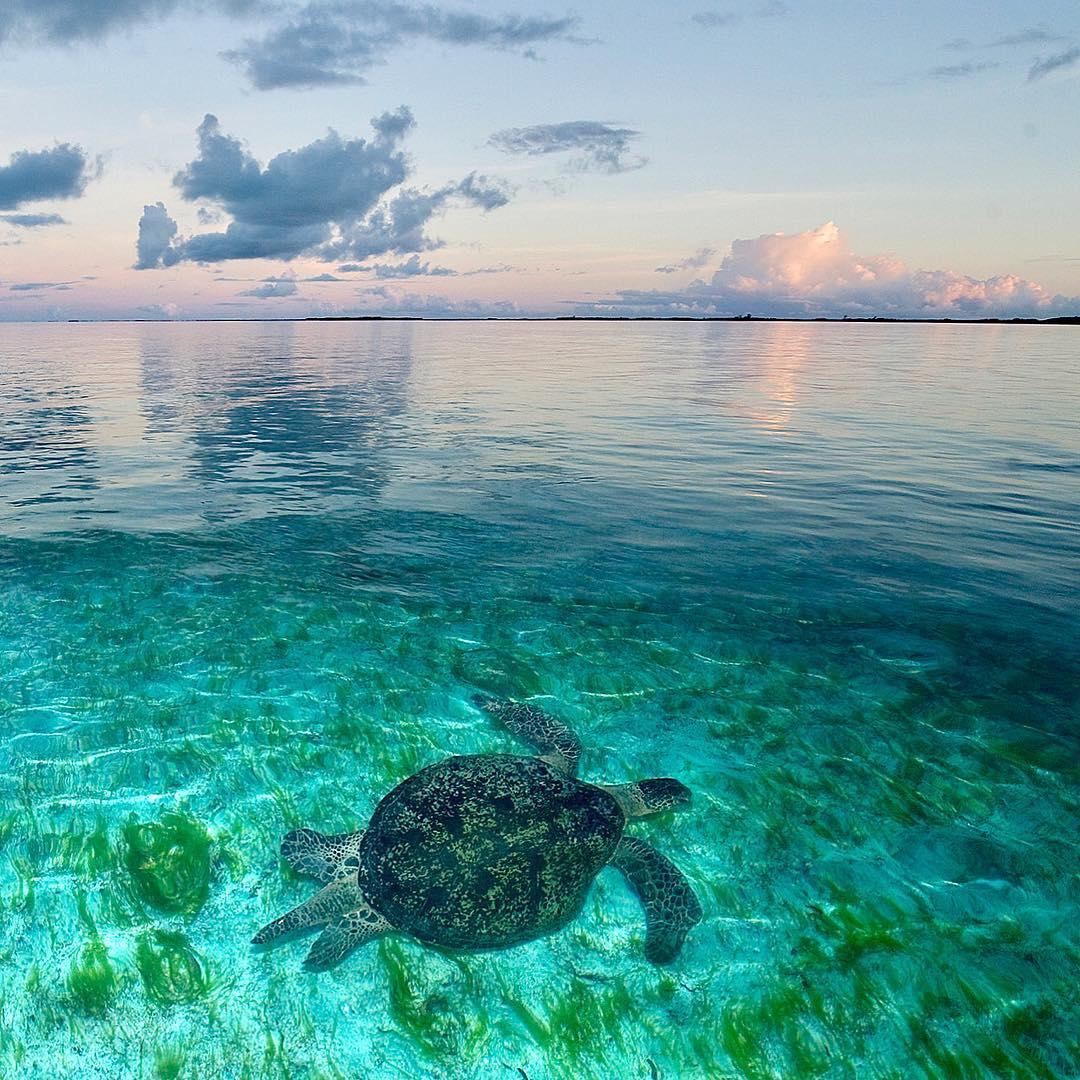 Океан и подводные снимки от Томаса Пескака
