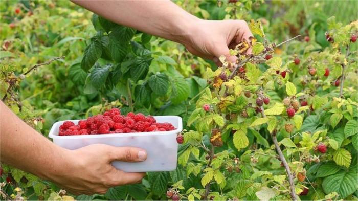 Летние фрукты и ягоды, из-за которых можно набрать лишний вес
