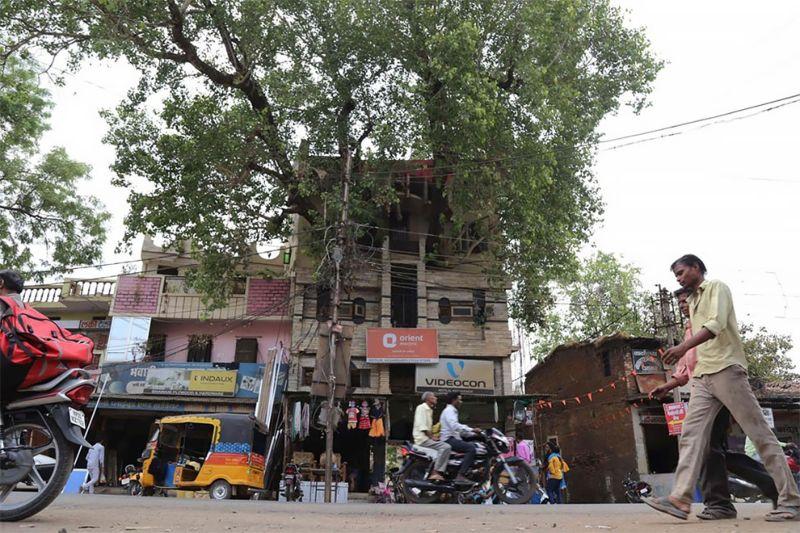 Необычный 4-этажный дом вокруг 150-летнего дерева